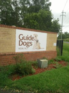 Foster a puppy Guide Dogs NSW